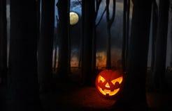 万圣夜南瓜在有大树的深黑暗的森林里发光 免版税库存图片