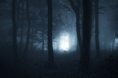 万圣夜夜在一个神秘的森林里 免版税库存图片