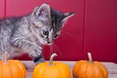 万圣夜小猫 免版税图库摄影