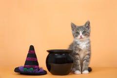 万圣夜平纹小猫 库存照片