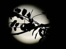 万圣夜月亮 免版税库存图片