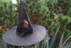 万圣夜有可怕蜘蛛的巫婆帽子 库存图片