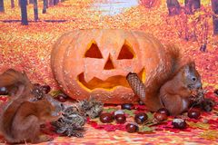 万圣夜灰鼠 免版税图库摄影