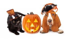 万圣夜猫和狗在滑稽的帽子 库存照片