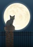 万圣夜猫场面 免版税库存图片