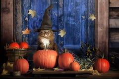 万圣夜猫 库存照片