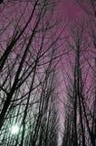 万圣夜背景森林 免版税图库摄影