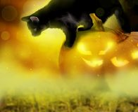 万圣夜背景用南瓜和猫 免版税库存照片