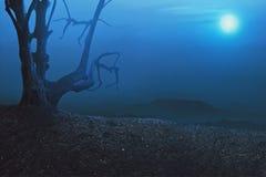 万圣夜背景,与mistical树的蠕动的大气 免版税库存照片
