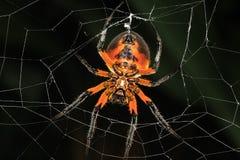 万圣夜蜘蛛 库存图片