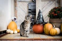 万圣夜装饰了前门用各种各样的大小和形状南瓜 在万圣夜装饰的前沿的猫 免版税库存图片