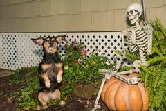 万圣夜达克斯猎犬 免版税库存照片