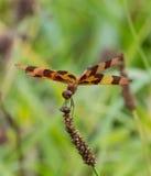 万圣夜Penant蜻蜓 免版税图库摄影