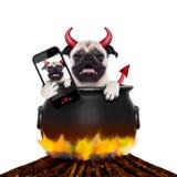 万圣夜selfie狗 免版税图库摄影