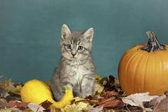 万圣节小猫。 免版税库存图片