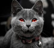 万圣节小猫 免版税库存照片