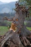 万圣节结构树 库存图片