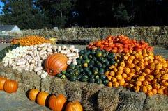 万圣节蔬菜 免版税图库摄影