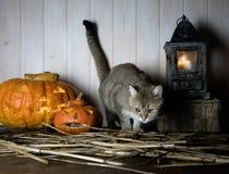 万圣节 在西部样式的葡萄酒内部 在南瓜和老灯笼旁边的英国猫 免版税库存图片