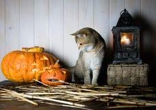 万圣节 在西部样式的葡萄酒内部 在南瓜和老灯笼旁边的英国猫 免版税库存照片