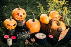 万圣节 杰克o灯笼 与微笑的可怕南瓜在蜡烛和蜘蛛附近在绿色森林里,室外 被定调子的照片 免版税库存照片