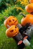 万圣节 杰克o灯笼 与微笑的可怕南瓜在蜡烛和蜘蛛附近在绿色森林里,室外 装饰 库存照片