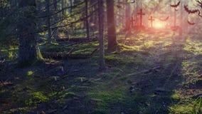 万圣节 鬼的森林在晚上 公墓在有薄雾的黑暗的深刻的森林森林背景中为万圣夜 库存照片