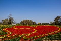 万寿菊和红色花 库存照片
