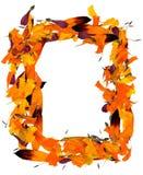 万寿菊和黄金菊被按的瓣背景 免版税图库摄影