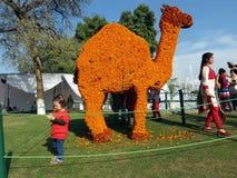 万寿菊在罗斯节日,昌迪加尔的花艺术 免版税库存照片
