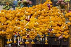 万寿菊开花背景在佛教寺庙在曼谷,泰国 库存照片