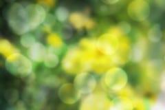 万寿菊花被弄脏的bokeh背景  免版税库存照片