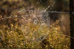万维网的接近的蜘蛛 图库摄影