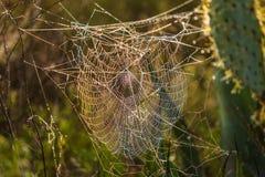 万维网的接近的蜘蛛 免版税图库摄影