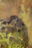 万维网的接近的蜘蛛 库存图片