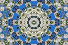 万花筒的花卉样式抽象背景  免版税库存照片