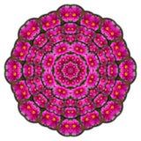 万花筒紫色花 库存图片
