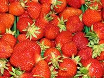万锦市草莓2017年 库存图片