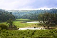 万隆湖种植园包围的茶 免版税库存图片
