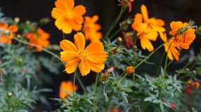 从万隆的美丽的花 库存图片