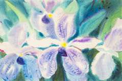 万代兰属coerulea兰花的绘的紫色颜色开花 免版税库存图片