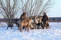 丈夫和妻子在被驯化的马勒的驯鹿牧民中 免版税库存图片