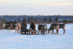 丈夫和妻子在被驯化的马勒的驯鹿牧民中 库存照片