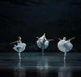 三一点天鹅舞蹈这天鹅湖边芭蕾天鹅湖 库存图片