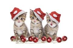 三与圣诞老人盖帽的小猫 免版税库存照片