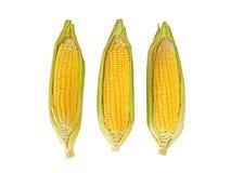 三与果壳的甜玉米在白色背景,裁减路线 图库摄影