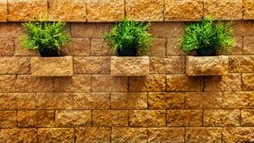 三丛在砖墙上的绿草 免版税库存照片