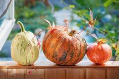 三个不同美丽的成熟南瓜在窗台在秋天庭院的背景中说谎在房子里 复制空间 免版税库存图片