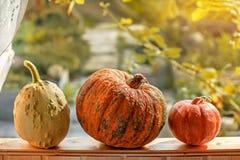 三个不同美丽的成熟南瓜在窗台在秋天庭院的背景中说谎在房子里 特写镜头 复制 图库摄影