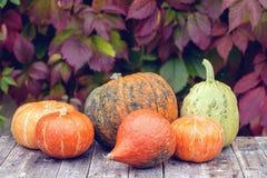 三个不同美丽的成熟南瓜在窗台在秋天庭院的背景中说谎在房子里 特写镜头 复制 免版税库存照片